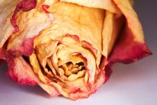Free Dried Rose Petals Royalty Free Stock Photos - 4747478