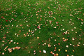 Free Fallen Leaves On The Meadow Royalty Free Stock Photography - 4750687