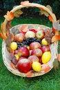 Free Basket With Fruit Stock Image - 4751681