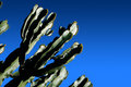 Free Cactus [01] Stock Images - 4754394