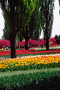 Free Field Of Tulips Stock Image - 4754881