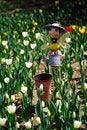 Free Tulip Field Stock Image - 4755161