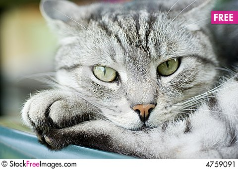 Free Resting Cat Stock Image - 4759091