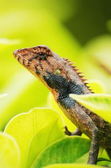 Free Close Up Photo Of Lizard Stock Photo - 4750090