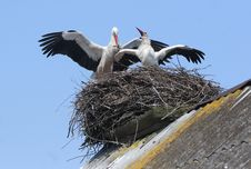 Free Storks In Nest On Roof Royalty Free Stock Image - 4750816