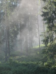 Free Misty Forest Royalty Free Stock Photos - 4750868