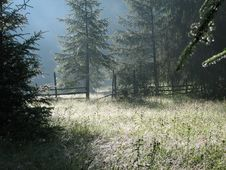 Free Misty Forest Stock Images - 4750904