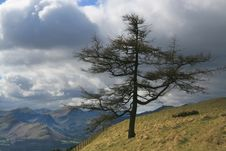 Solitary Tree On A Hill Stock Photos