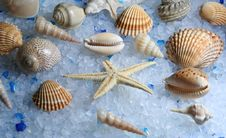 Free Shell Stock Photography - 4751302