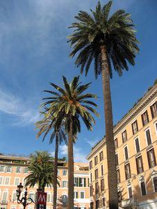 Free Palme A Roma Stock Photography - 4751312