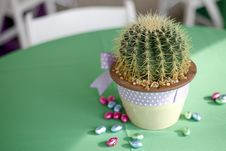 Free Easter Cactus Royalty Free Stock Photography - 4751437