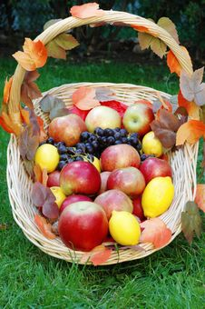 Free Basket With Fruit Stock Image - 4751681
