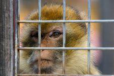 Free Monkey Jail Stock Images - 4752104