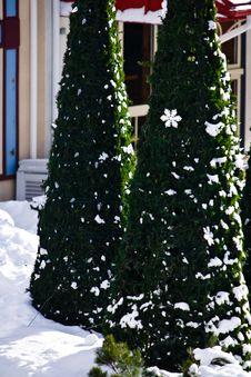 Free Christmas Trees In A Ski Resort Village Royalty Free Stock Photo - 4752435