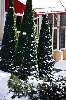 Free Christmas Trees In A Ski Resort Village Stock Photo - 4752440
