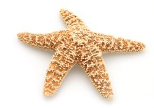 Free Starfish Of Nature Royalty Free Stock Images - 4752839