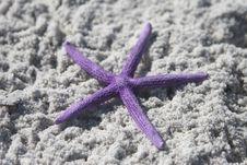 Free Purple Starfish Royalty Free Stock Photos - 4752888
