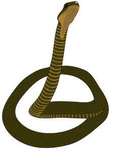 Free Snake Stock Photo - 4753060