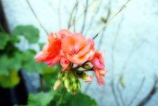 Free Blossom Macro With Orton Stock Photo - 4753270