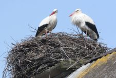 Free Storks In Nest On Roof Royalty Free Stock Photo - 4753915