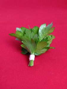 Free Bouquet Of Parsley Stock Photo - 4753930