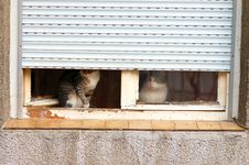 Free Pair Of Cats Stock Photography - 4754012