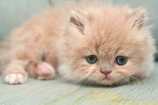Free Nice Fluffy Kitten Stock Photography - 4754062