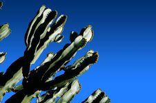 Free Cactus [01] Stock Images - 4754394