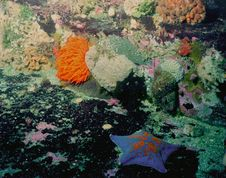 Underwater Life Of Kuril Islands Stock Photos