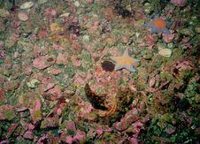 Underwater Life Of Kuril Islands Stock Photography