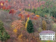Free Autumn Royalty Free Stock Image - 4755326