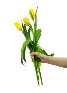 Free Three Tulips Royalty Free Stock Photo - 4755415
