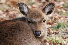 Free Deer Stock Photography - 4756352