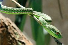 Free Sneaking Snake Stock Image - 4756661