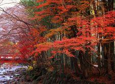 Free Nature-102 Royalty Free Stock Image - 4757146