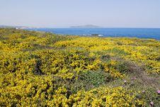 Free Yellow Crete Royalty Free Stock Photos - 4757218