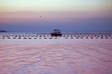 Free Sea Sunset And Mussel Farm Royalty Free Stock Image - 4757656