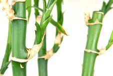 Free Bamboo Stock Photos - 4758213