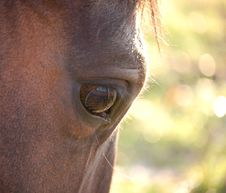 Free Horse Eye Stock Image - 4758561