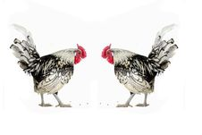 Free Cock Royalty Free Stock Image - 4759026