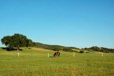 Free Grassland Stock Photo - 4759060