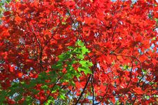 Free Autumn Contrast Royalty Free Stock Photos - 4759448