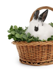 Free Cute Bunny Royalty Free Stock Photo - 4759945