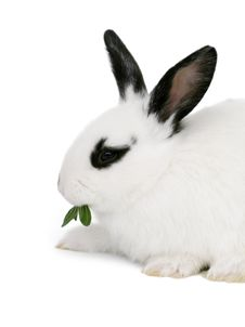 Free Cute Bunny Royalty Free Stock Photography - 4759947