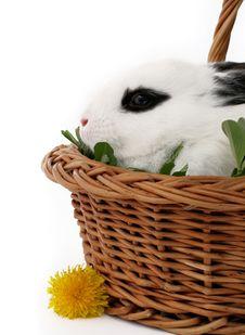 Free Bunny Stock Image - 4759951
