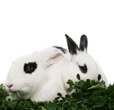 Free Two Bunnies Royalty Free Stock Photography - 4759957