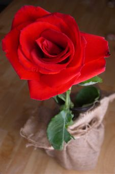 Free Red Rose Stock Photos - 4760123