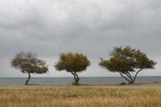 Free Three Trees Stock Image - 4760291