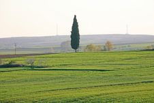 Free Cypress In The Field Royalty Free Stock Images - 4760519