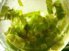 Free Green Herbsoil Stock Photo - 4760740